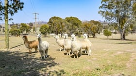 Rural / Farming commercial property for sale at 1097 Windeyer Road Mudgee NSW 2850