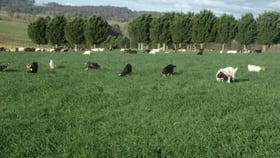 Rural / Farming commercial property for sale at 7721 Thunderbolts Way Nowendoc NSW 2354