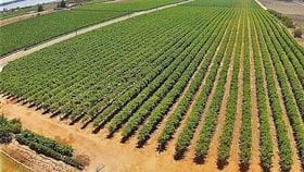 Rural / Farming commercial property for sale at 77 Battams Road Moorook SA 5332