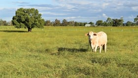 Rural / Farming commercial property for sale at 680 McDonalds Bridge Road Dyraaba NSW 2470