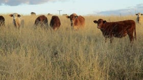 Rural / Farming commercial property for sale at 288 ACRES GRAZING BLOCK Quinalow QLD 4403