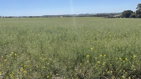 Rural / Farming commercial property for sale at Lot 150 Mawson Road Beverley WA 6304
