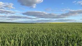 Rural / Farming commercial property for sale at ENEABBA-THREE SPRINGS ROAD Three Springs WA 6519