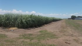 Rural / Farming commercial property for sale at 31 Klondyke Road Ayr QLD 4807