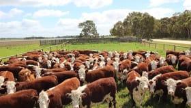 Rural / Farming commercial property sold at 5 Moyhall Road Naracoorte SA 5271