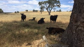 Rural / Farming commercial property for sale at Lots 102 and 3 Matthews Road Eden Valley SA 5235