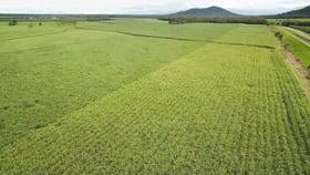 Rural / Farming commercial property for sale at Dingo Pocket QLD 4854