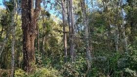 Rural / Farming commercial property for sale at 1010 Tatham Ellangowan Road Ellangowan NSW 2470