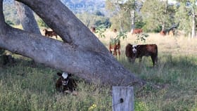 Rural / Farming commercial property for sale at 83 farm road Bonalbo NSW 2469