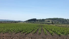 Rural / Farming commercial property for sale at 143 Skyline Road Monaltrie NSW 2480