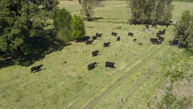 Rural / Farming commercial property for sale at 11 Onslow Lane Kundle Kundle NSW 2430