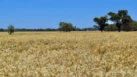 Rural / Farming commercial property for sale at 10000-10067 The Escort Way 'Part-Wilgas' Forbes NSW 2871