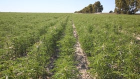 Rural / Farming commercial property for sale at Lot 26776 Mathew Road Cunderdin WA 6407