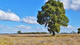 Rural / Farming commercial property for sale at 'Raymad' Gillenbine Road Trundle NSW 2875