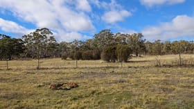 Rural / Farming commercial property for sale at 295 Wolgon Road Oallen NSW 2580