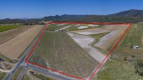 Rural / Farming commercial property for sale at 2155 Sarina Homebush Road Oakenden QLD 4741