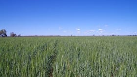 Rural / Farming commercial property for sale at . Barwon River Road Collarenebri NSW 2833