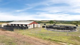 Rural / Farming commercial property for sale at 458 Blakney Creek North Road Blakney Creek NSW 2581