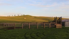 Rural / Farming commercial property for sale at 1441 Coleraine-Merino Road Tahara Bridge VIC 3315