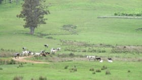 Rural / Farming commercial property for sale at - Wyllies Road Riana TAS 7316