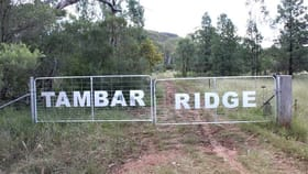 Rural / Farming commercial property for sale at 100 High Tambar Springs NSW 2381