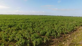 Rural / Farming commercial property for sale at 245 Don Hunts Road Cannawigara SA 5268