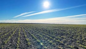 Rural / Farming commercial property for sale at Roxburgh Walgett NSW 2832