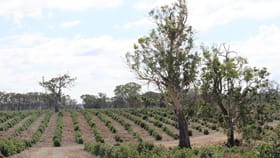 Rural / Farming commercial property for sale at 89c Thompson Street Hamilton VIC 3300