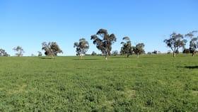 Rural / Farming commercial property for sale at 719 Gumwell road Tintinara SA 5266