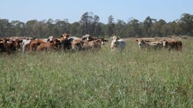 Rural / Farming commercial property for sale at AUCTION ''GLENCOE'' - 1279 ACRES CATTLE GRAZING Chinchilla QLD 4413