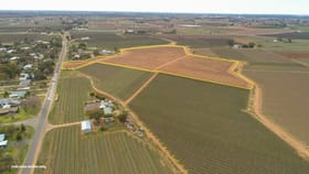 Rural / Farming commercial property for sale at 135 Boobook Avenue Red Cliffs VIC 3496