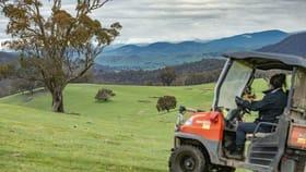 Rural / Farming commercial property sold at 110 Tumbarumba Creek Road Tumbarumba NSW 2653