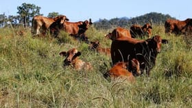Rural / Farming commercial property for sale at Sarina Range QLD 4737