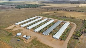Rural / Farming commercial property for sale at 48 Cawrse Road Mallala SA 5502
