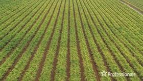 Rural / Farming commercial property for sale at 139 Paringi Road, Paringi Via Monak NSW 2738