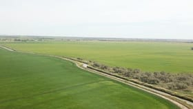 "Rural / Farming commercial property for sale at ""Boree Downs"" 3848 Bringagee Road Tabbita NSW 2652"