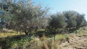 Rural / Farming commercial property for sale at 4351 Cobbadah Road Bingara NSW 2404