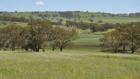 Rural / Farming commercial property for sale at 705 Coolah Rd, 'Culbara' Cassilis NSW 2329