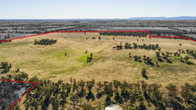 Rural / Farming commercial property for sale at 54 Silo Road Young NSW 2594