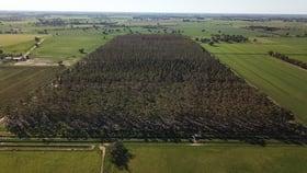 Rural / Farming commercial property for sale at McEwans Lane Deniliquin NSW 2710