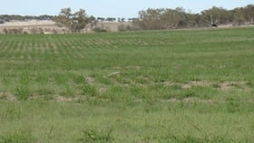 Rural / Farming commercial property for sale at 749 Mt Horner Road Allanooka WA 6525