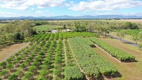 Rural / Farming commercial property for sale at Paddys Green QLD 4880