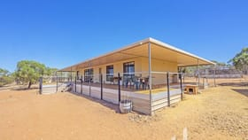 Rural / Farming commercial property for sale at 176 Mallee Acres Road Fisher SA 5354