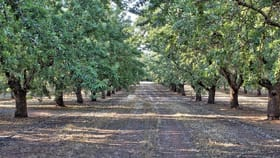Rural / Farming commercial property for sale at Lot 52 Newton Road Loxton SA 5333