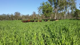Rural / Farming commercial property for sale at Lowood QLD 4311