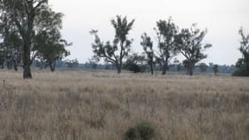 Rural / Farming commercial property for sale at . Lot 3 Wambianna Rd Warren NSW 2824