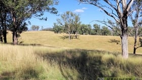 Rural / Farming commercial property for sale at 800 Toms Gully Road Hickeys Creek NSW 2440