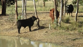 Rural / Farming commercial property for sale at 200 ACRES RURAL LIFESTYLE PROPERTY Dalby QLD 4405