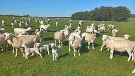 Rural / Farming commercial property for sale at 451 Yungup North Road Napier WA 6330