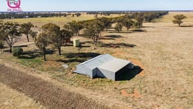 Rural / Farming commercial property for sale at 376 Yiddah Road West Wyalong NSW 2671